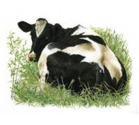 Friesian Cow 1