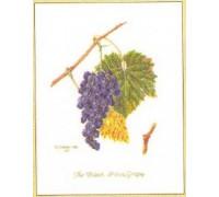 Grapes Sampler