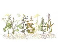 Herbs Panel