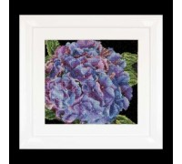 Hydrangea by Thea Gouverneur - 497