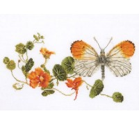 Orange Tip Butterfly and Nasturtiums