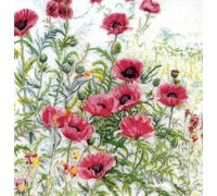 Red Poppies Study