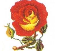 Single Sultan Rose