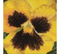 Yellow and Brown Pansy - 458A - 18ct