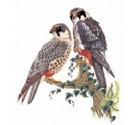 Falcons Cross Stitch