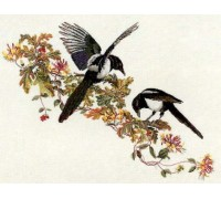 Birds - Magpies