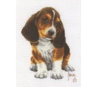 Beagle Puppy - 2002\70.063