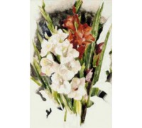 Gladiolus - Chart or Kit